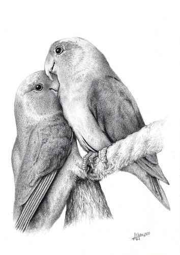 Love Bird Drawings In Pencil With Images Bird Drawings