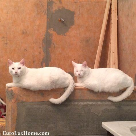 National Cat Day Meet Pumpkin National Cat Day Cats Love Pet
