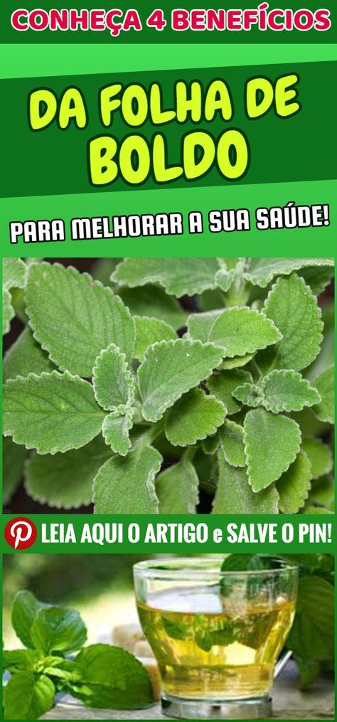 boldo plantas que curam a diabetes