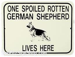 funny german shepherd pics - Google Search