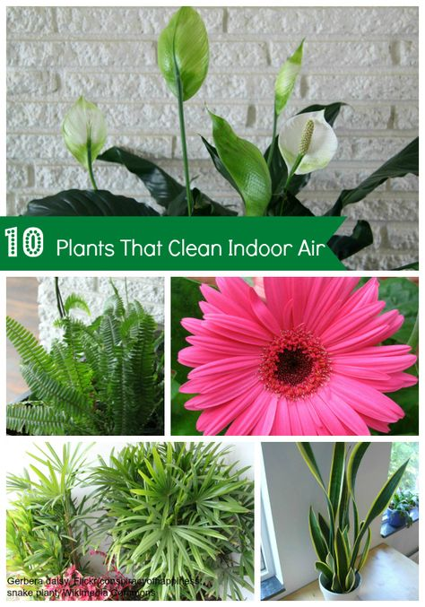These 10 common house plants help purify or clean indoor air in addition to good ventilation and air filters.