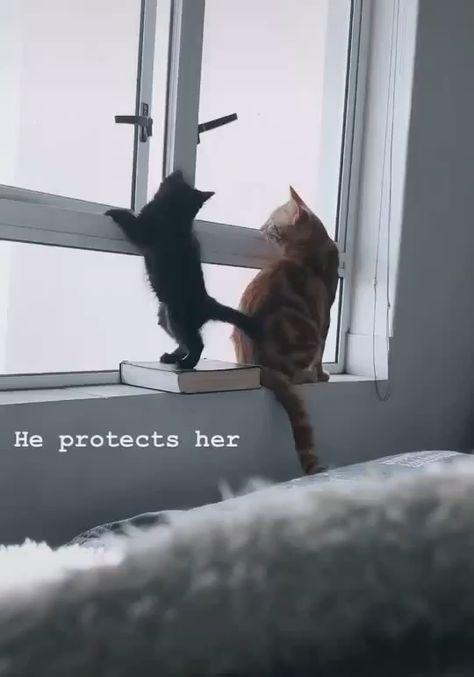 No! --Dad Cat 😊😅