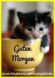 Guten Morgen Gb Pics Süßeste Haustiere Bezaubernde
