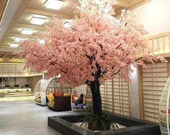 Amazon Is Selling A Grow Your Own Cherry Blossom Bonsai Tree Kit For 20 Cherry Blossom Bonsai Tree Bonsai Tree Cherry Blossom