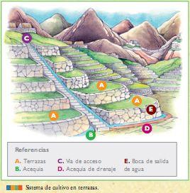 La Agricultura Comenzó En El Perú En El 5000 A C Y Fue La