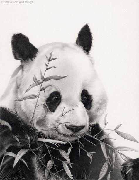 Panda Drawing - Mounted print of original pencil drawing