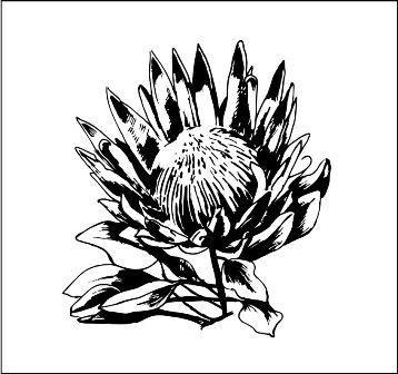 Protea 5 Protea Flower Protea Art Protea