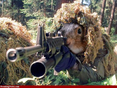 Squirrel With M And M A Well Armed Squirrel Keeps Its Nuts - Squirrel photographed in heroic pose becomes star of hilarious photoshop battle