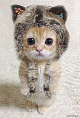 Kittens In A Basket Kittens Raleigh Nc Susse Tiere Babytiere Baby Katzen