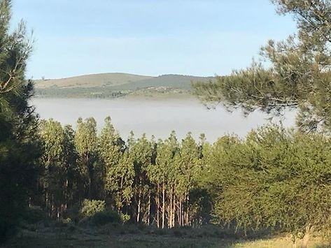 A Morning Walk In Acadia Where You Can Get Lost In The Thick Fog Love The Landscapes In Pueblo Eden Puebloeden Uruguaynatural Landscape Pueblo Instagram