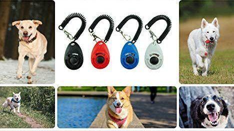 Best Dog Training Accessories Best Dog Training Dog Training
