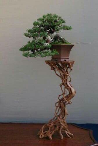 Pin By Yasmine Sarraf On Bonsai Insp3 Bonsai Tree Care Bonsai Trees For Sale Bonsai Forest