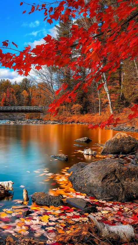 Nadire Atas on Beautiful Autumn Scenes Beautiful. Fall Pictures, Nature Pictures, Pretty Pictures, Beautiful World, Beautiful Places, Beautiful Scenery, Landscape Photography, Nature Photography, Scenary Photography