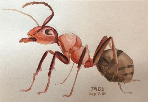 An Ant A Bug That Isn T As Gross As Other Bugs Watercolor