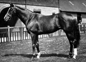 Fair Trial(1932)(Colt)Fairway- Lady Juror By Son In Law. 4x5 To St Simon, 5x5 To Hampton, Springfield & Sanda. Won Longleaf S(Eng), Queen Anne S(Eng), Select S(Eng), Ormonde S(Eng), Newmarket Spring Plate(Eng), Rous Memorial, Lingfield Park Plate(eng), 2nd March S(Eng), 3rd Eclipse S(Eng). A Very Successful Stallion In His Own Right.