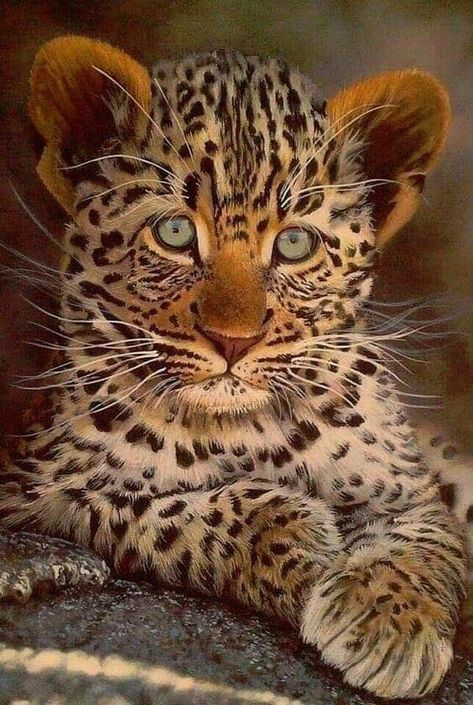 """😍 The way animals should be shot! 📸 Photo credit: n/a"""" Big Cats, Cats And Kittens, Cute Cats, Nature Animals, Animals And Pets, Wild Animals Photos, Beautiful Cats, Animals Beautiful, Cute Baby Animals"""