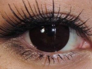 WittyFeed - Latest News, Viral Stories and Trending Videos Dark Brown Eyes, Black And Brown, Black Dark, Brown Eyes Aesthetic, Rare Eye Colors, Rare Eyes, Blue Eye Color, Amber Eyes, Eye Photography
