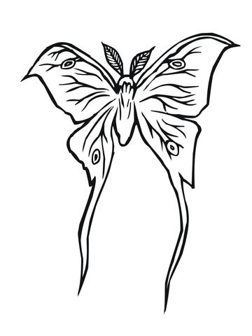Luna Moth Coloring Page From Moth Category Select From 31621 Printable Crafts Of Cartoons Nature Anim Coloring Pages Bird Coloring Pages Cute Coloring Pages