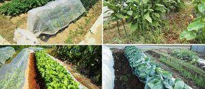 ジャガイモの育て方 画像あり 家庭菜園 ジャガイモ 野菜