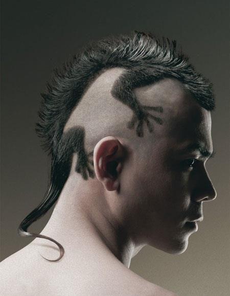 gecko hawk = evil genius hair stylist
