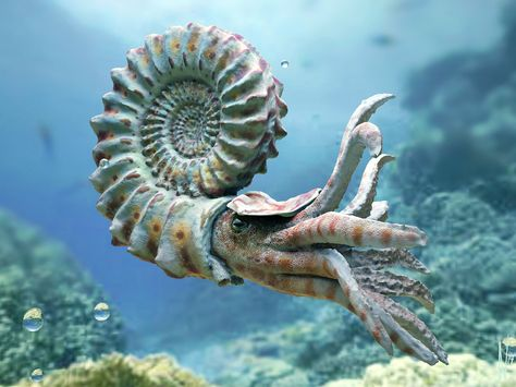 Prehistoric Animals - Nautiloid and Helicoprion Beautiful Sea Creatures, Deep Sea Creatures, Animals Beautiful, Deep Sea Animals, Underwater Creatures, Underwater Life, Underwater Animals, Extinct Animals, Prehistoric Creatures