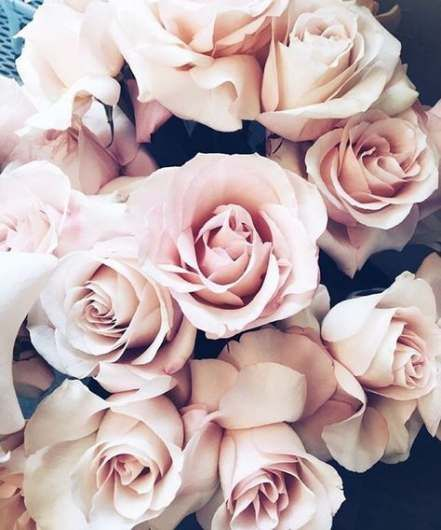 40 Ideas For Photography Tumblr Vintage Dreams Flowers Photography Wallpaper Wallpaper Iphone Spring Flowers Photography Coolest rose flower hd wallpaper