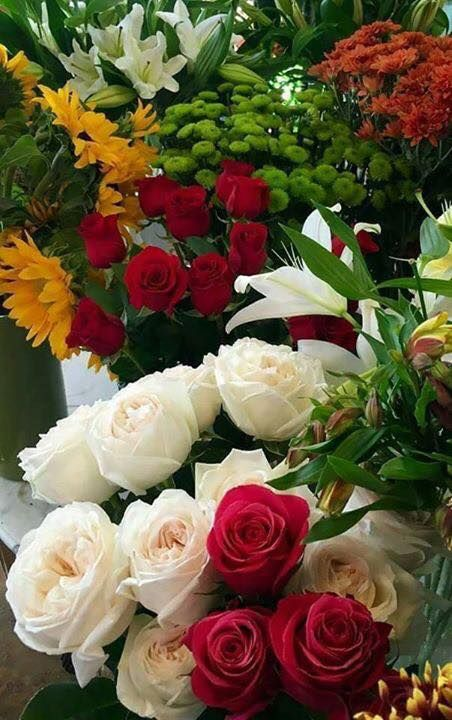 Https Www Facebook Com Jessy Catiempo Photos A 281342398727329 1073741827 281337225394513 780 Beautiful Rose Flowers Beautiful Flowers Very Beautiful Flowers