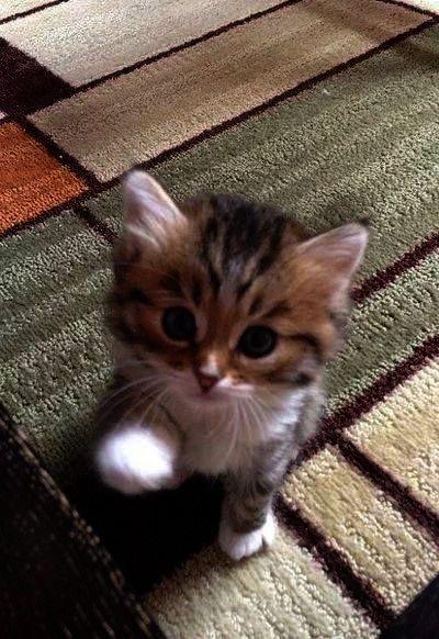 Cute Cats For Whatsapp Dp Cute Cats Love Hugging Kittens Cutest Cats And Kittens Cute Cats