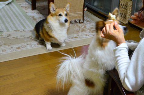犬が雷の音を怖がるのは雷恐怖症 花火など大きな音が苦手な原因や注意点は 犬 動物 恐怖症