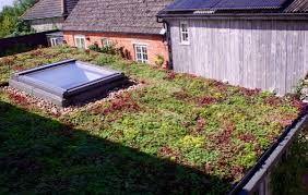 Image Result For Gutter Onto Green Roof Sedum Roof Green Roof Green Roof Planting