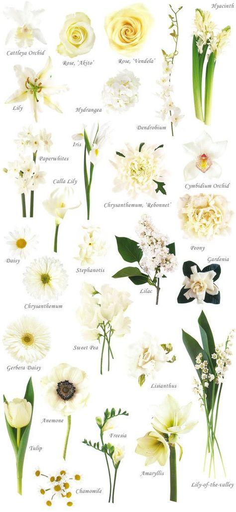 Pin On Language Of Flowers