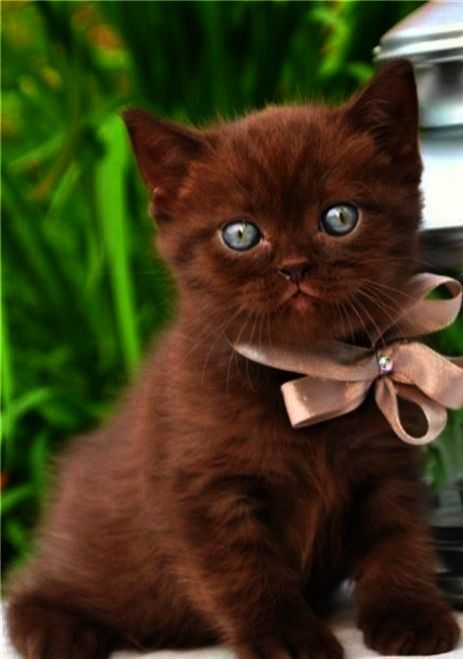 Pin On Cute Cat And Kittens