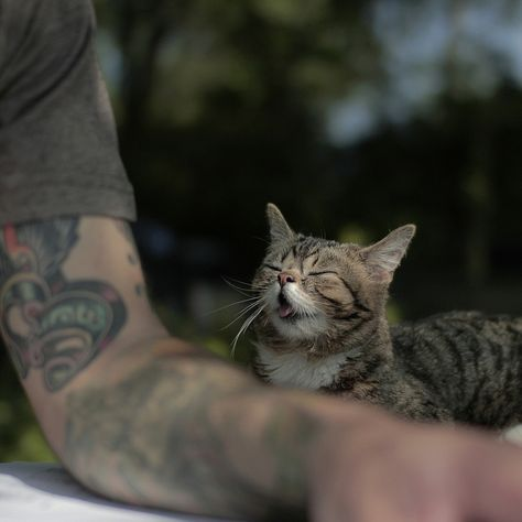 {Bub, the one-of-a-kind cutie cat} a special kittycat with a dude who loves her.