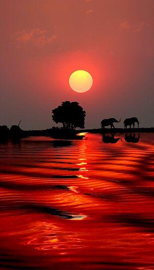 Sunset with elephants, Botswana