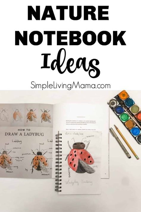 Get nature notebook ideas for your homeschool! The nature notebook is an important part of nature study, so youll want a nature journal for your kids! Journal Prompts For Kids, Study Journal, Nature Journal, Journal Ideas, Journal Inspiration, Diy Nature, Nature Study, Journal Vintage, Moleskine