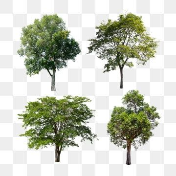 Tropical Trees Isolated Set Nature Park Green Png Transparent Clipart Image And Psd File For Free Download Tree Psd Watercolor Tree Tropical Tree
