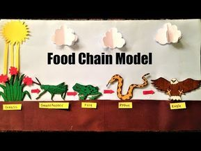 Food Chain Model Project For School Students Science Exhibition Youtube In 2020 Food Chain Activities Food Chain Food Chain Worksheet