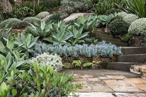Jardim Em Port Hacking Sydney Estado De Nova Gales Do Sul Australia Native Garden Succulent Landscape Design Dry Garden