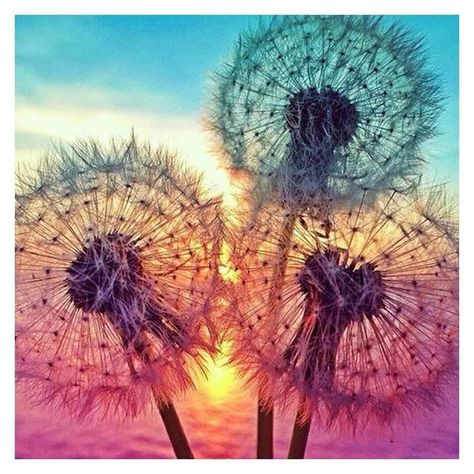 5D Diy Diamond Painting colorful dandelion Family Embroidery Painting Square Mosaic Drill Resin  ful