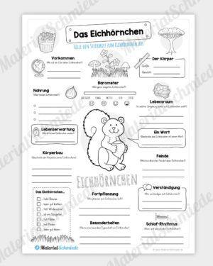 Steckbrief Eichhornchen In 2020 Steckbrief Eichhornchen Lernen