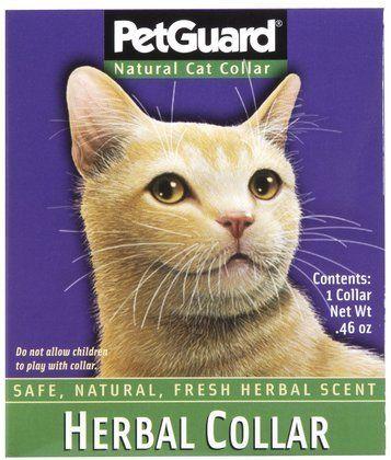 Herbal Collar For Cats Quantity Of 4 Cat Collars Cat Fleas Cats