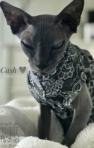 Shades Of Grey Paisley Sphynx Cat Clothes Beautiful Cats Pretty Cats