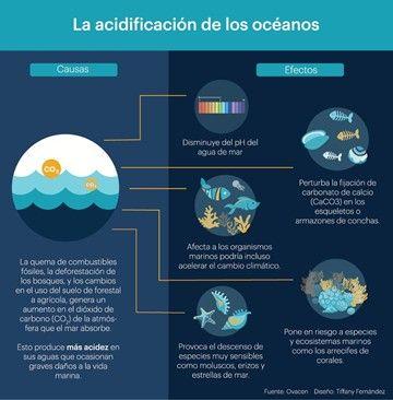 Pin En Acidificacion Del Oceano