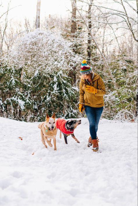 #snowday #maine #llbean #llbeanpets #newenglandstyle #winter #cattledogs