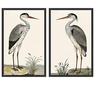 Spotted Heron Framed Prints Framed Prints Antique Inspiration Square Wall Art