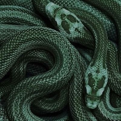 🐍SHADES OF INTERVIEW: GREEN WITH PDU🐍