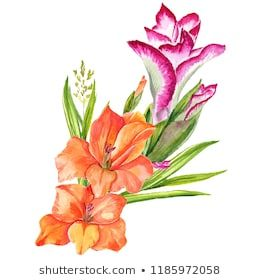 Watercolor Realistic Gladiolus Flower Botanical Flower Wild Spring Leaf Of The Wild Aquarelle Wildflower For Backgroun Lily Flower Botanical Flowers Flowers