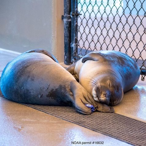 "The Marine Mammal Center on Instagram: ""'Twas the night before #GivingTuesday and all through the pens not a creature was stirring, not even a pup 😴 Make sure to join us LIVE on…"""
