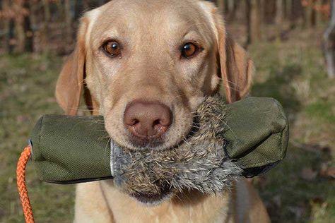 27 Ideas De Mascota Mascotas Perros Perros Cachorros
