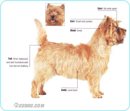 Cairn Terrier Cairn Terrier Steinhaufen Terrier
